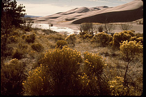 Great Sand Dunes National Park and Preserve GRSA3211.jpg