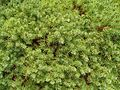 Green ground or bush texture.jpg