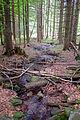 Großen Schachtenwanderung ab Buchenau im Nationalpark Bayerischer Wald 08.JPG