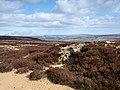 Grouse butt near Wolf Pit - geograph.org.uk - 725403.jpg