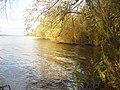 Grunewald - Baumen am Havelufer (Trees on the Bank of the Havel) - geo.hlipp.de - 30282.jpg