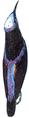 Guit-guit (Millot-1907).png