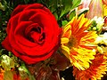 HK Central flowers City Hall art expo Red rose n Yellow daisy Nov-2012.JPG