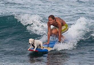 Dog Boarding Honolulu Hawaii