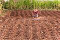 Hard work in the fields.jpg