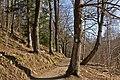 Hausschachenalle in Weitra 2014-03 03 NÖ-Naturdenkmal GD-051.jpg