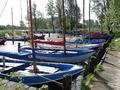Haven Stierop.png