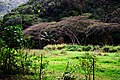 Hawaii Big Island Kona Hilo 216 (7025123523).jpg