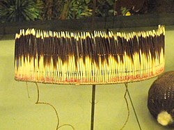 Headband, porcupine quills, Witoto people - South American objects in the American Museum of Natural History - DSC06070.JPG