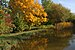 Hemmingen Böhnlachteich im Herbst (2).jpg