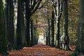"""Hermelijndreef - """"De Punt Visdonk"""" - panoramio.jpg"""