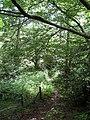 Hermitage Rocks Wood - geograph.org.uk - 1376654.jpg