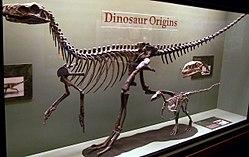 Herrerasaurusskeleton.jpg