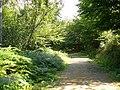 High Wood, High Weald - geograph.org.uk - 227488.jpg