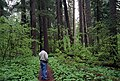 Hiking old growth forest trail, Gifford Pinchot National Forest (36361241453).jpg