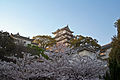 Himeji castle April 23.jpg