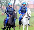 Horse mounted.JPG