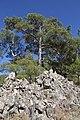 Horteri Nature Trail - panoramio (8).jpg