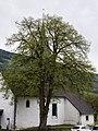 ID 1062 Linde in St. Lorenzen 0002.jpg