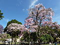 Ibagué en flor (7598451688).jpg