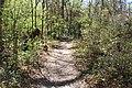 Ichetucknee Springs State Park Trestle Point trail 2.jpg