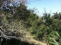 Iguape - SP - panoramio (254).jpg