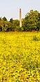 Il giallo sotto la Fornace. Ph Ivan Stesso.jpg