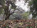 Indian Botanic Garden - Howrah 2012-01-29 1666.JPG
