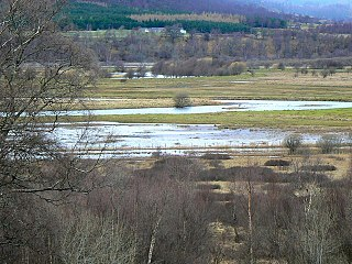 Insh Marshes