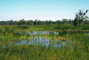 Iroquois National Wildlife Refuge - Image: Iroquois National Wildlife Refuge, New York. Credit USFWS (11738370896)