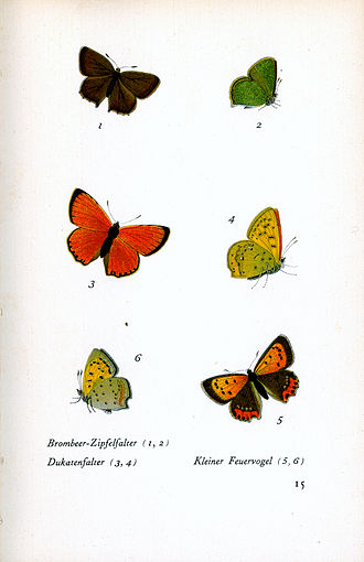 Jacob Hübner - Plate from Hubner's Das kleine Schmetterlingsbuch showing green hairstreak, scarce copper and small copper