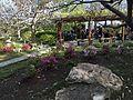 Japanese Friendship Garden (Balboa Park, San Diego) 18 2016-05-14.jpg