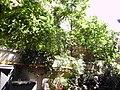Jardín - panoramio.jpg