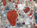 Jasper-quartz pebble conglomerate (Lorrain Formation, Paleoproterozoic, ~2.3 Ga; Ottertail Lake Northeast roadcut, near Bruce Mines, Ontario, Canada) 44 (40742965593).jpg