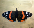 Jesse Waugh - Brighton Butterfly - Red Admiral.png