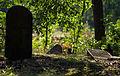 Jewish cemetery Otwock Karczew Anielin IMGP6797.jpg