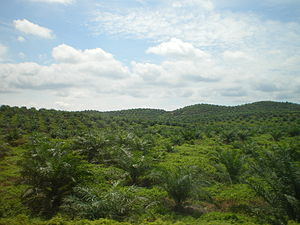 Palm oil production in Malaysia - New palm oil plantation in East Malaysia (2010)