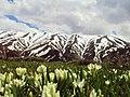 Kış mevsimi ardından Erzincan.jpg
