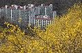 KOCIS Korea Seoul Spring Flowers 08 (8661613005).jpg