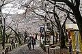 Kairakuen (6979430946).jpg