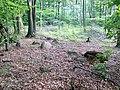 Kamienie w lesie w Chotkowie - panoramio.jpg