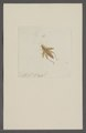Kend - Print - Iconographia Zoologica - Special Collections University of Amsterdam - UBAINV0274 066 02 0085.tif