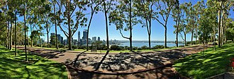 Kings Park, Western Australia - Panorama of Lemon scented gums (Corymbia citriodora) along Fraser Avenue, Kings Park
