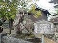 Kishimoto-ansei.jpg