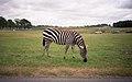Knowsley Safari Park, Prescot (260224) (9452797077).jpg