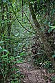 Ko Lanta Jungle Hiking Trail 7 - panoramio.jpg