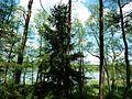 Księże Lake in Noteć Forest.JPG