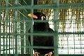 Kuala Lumpur Bird Park, Bird.jpg