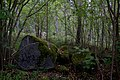 Kyrkberget lindesberg skog stenar.jpg