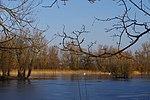 LSG H 00070 Calenberger Leinetal - Teich an der Calenburg (12).jpg